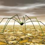 muncie spider control